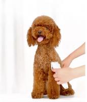 """Xiaomi Pawbby – מכונת תספורת לכלב ולחתול! שקטה ובטוחה במיוחד – רק ב65 ש""""ח!"""